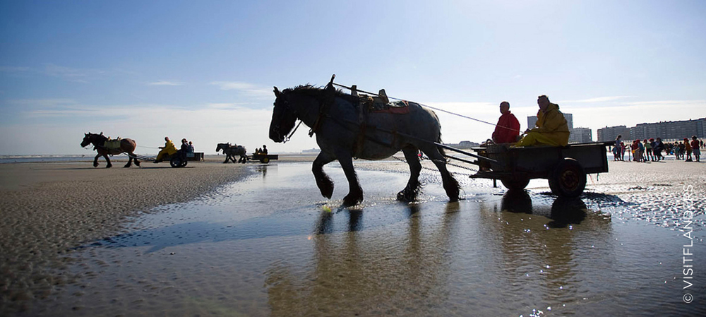 Shrimp fishers on horses in Oostduinkerke